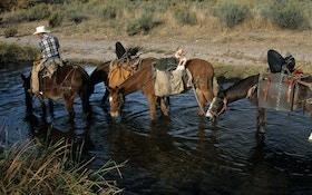 Plan Your Western Elk Hunt