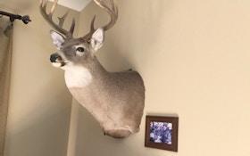 Hang Framed Photos Beside Your Trophy Mounts
