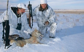 Tips for Hunting Coyotes in High Wind