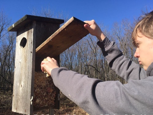 Of all your early spring cleaning chores, maintaining a wood duck house is likely the easiest — and most fun!