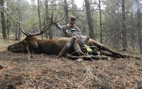 Bugling Bull Pro Staffer J.C. Navarro On Calling Elk