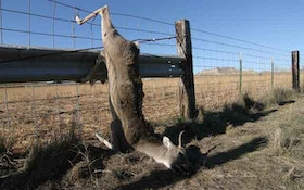 Rattle A Fence For Coyotes