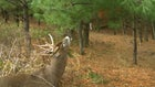 Deer Protection Program Transitioning From ATA to the Responsible Hunting Scent Association