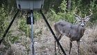 Should You Stock Deer Feeders?