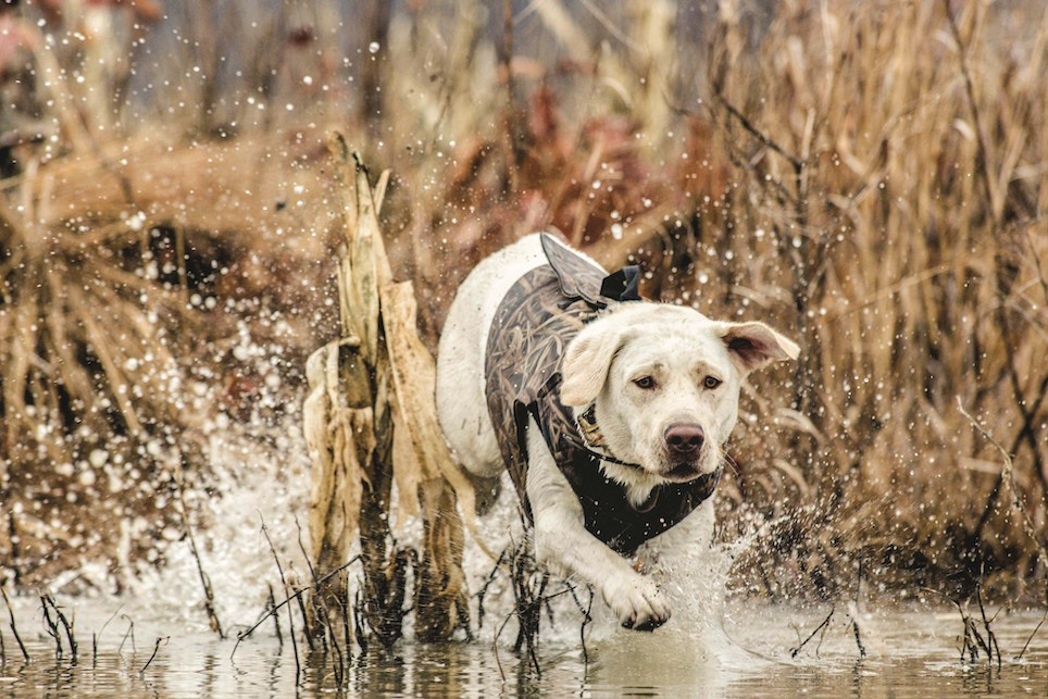 Profitable Hunting Dog Gear to Stock
