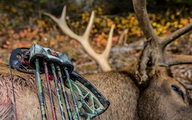 6 Great Bow Quivers