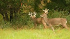 CWD and the Scent Industry