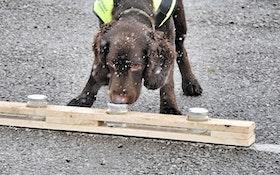 Meet Britain's First Water Leak Sniffer Dog