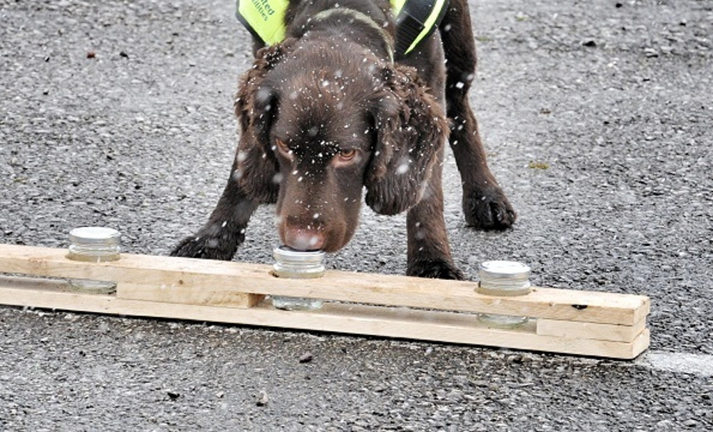 Meet Britain's First Water Leak Sniffer Dog