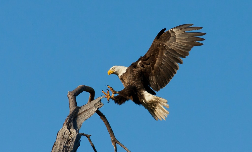 Eagle Nesting Site With Webcam Planned at Wisconsin WWTP