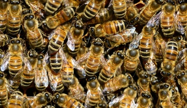 Water Utility Spearheads Honeybee Project