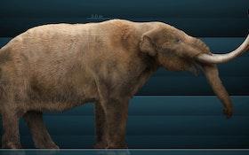 Snowmastodon! Reservoir Project Unearths Fabulous Fossils