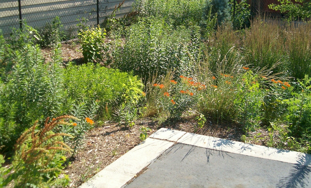 Students Design On-Campus Green Infrastructure Solutions to Manage Stormwater