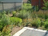 ​Students Design On-Campus Green Infrastructure Solutions to Manage Stormwater