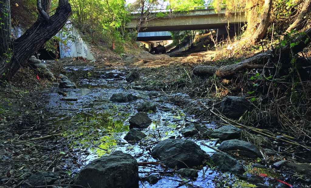 Santa Clara Water District Keeps Steelhead Trout Moving