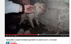 Homeless Dog Rescued From Sewer