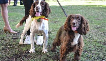 Dogs Being Trained to Sniff Out Water Leaks