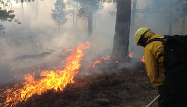 How Wildfires Contaminate Drinking Water Sources