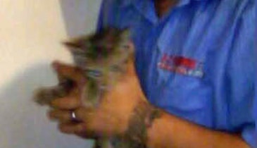 Plumber Sets Kitten Free on Independence Day