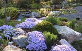 The Best Landscaping Options For Septic Drainfields