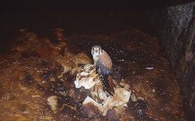 Vault Toilet Vent Pipes Pose a Wildlife Entrapment Danger