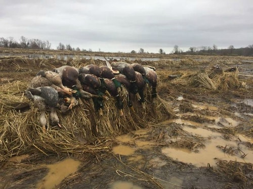 Waterfowling is a wet, muddy affair by nature, making durability a priority for many hunters looking to buy a new call.