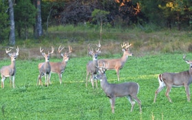 Whitetail Institute of North America Acquired by PRADCO Outdoor Brands