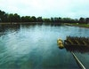 Effluent Benefits Wildlife at Barataria-Terrebone Estuary