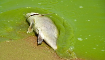 Climate Study Uncovers Bad News for Water Quality