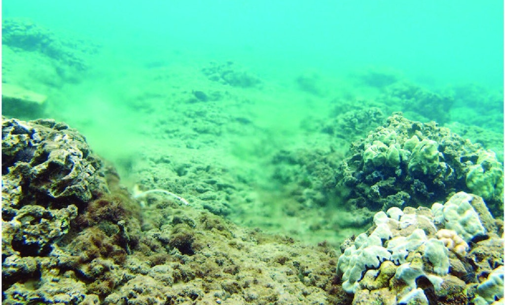 Coral Study Traces Excess Nitrogen to Maui WWTP