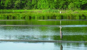 The Lure of Lagoons: Why Wildlife Thrives Around Marion's Wastewater