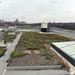 Rooftop Plantings, Storm Drain Painting and Residential Rain Barrels Help Control Runoff in Richmond