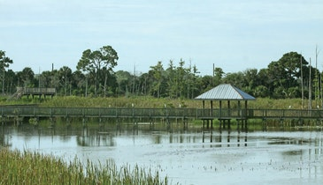 More Than 170 Species of Bird Visit This Wastewater Plant