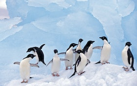 Treating Antarctica's Wastewater to Save its Wildlife