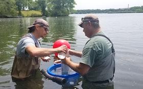Philadelphia Is Using Mussels as Mini Treatment Plants