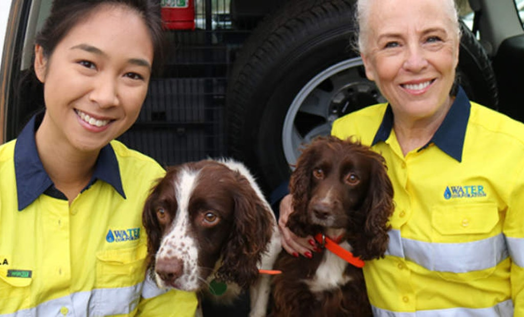 Utility Invests in Australia's First Water Leak Detection Dog