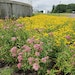 More Than Just Flowers Decorate the Gardens at This Clean-Water Plant