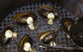 Water-Quality Canaries: Using Mussels to Detect Contaminants