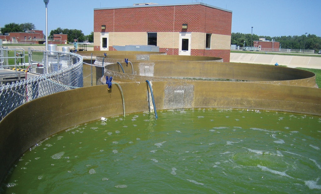 Going Green with Algae