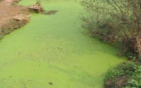 Phosphorus Pollution Reaching Dangerous Levels Worldwide, Study Finds
