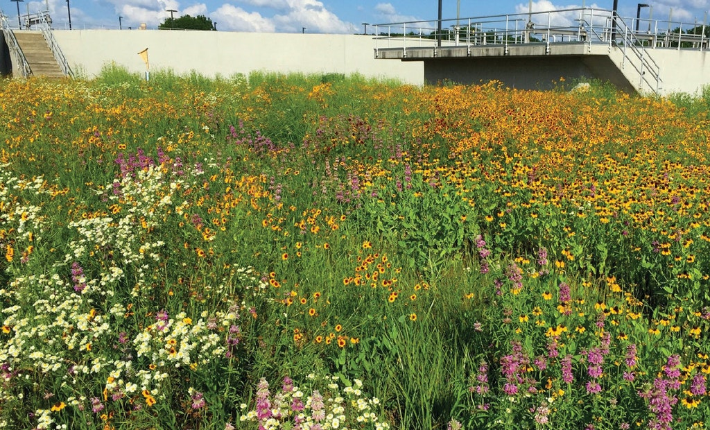 Redirecting Water to Create a Sustainable Plant Environment