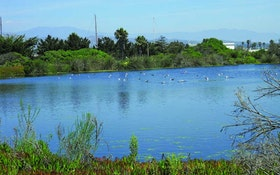Providing Sanctuary: Operators Convert Discharge Ponds to Wildlife Habitat