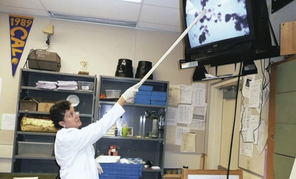 Superbugs Study Findings Could Impact U.S. Treatment Plants