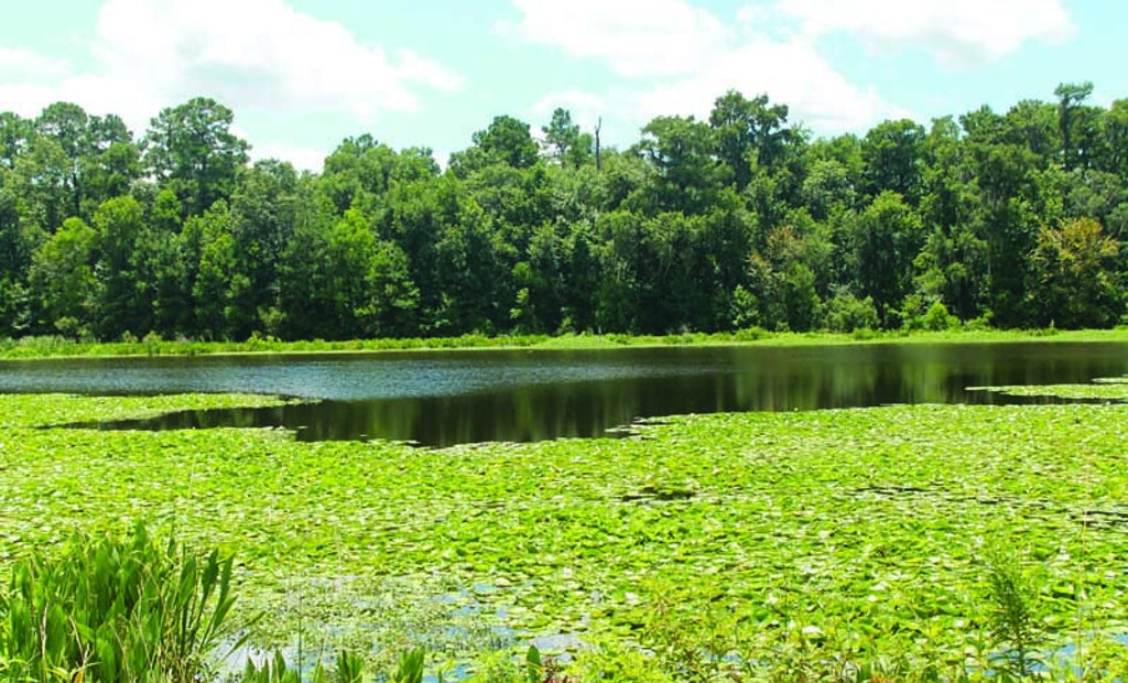Wetlands Becomes City's First Water Reuse Customer