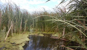 Study Shows Wetlands Provide Landscape-Scale Reduction in Nitrogen Pollution