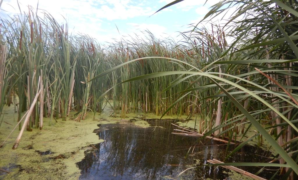 Study Shows Wetlands Provide Landscape-Scale Reduction in Nitrogen Pollution