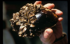 Zebra Mussels On the Move: What Are Water Utilities Doing to Stop Them?